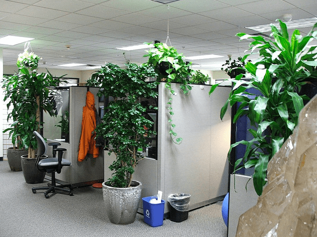 Office Plants Increase Productivity and Make Workers Happier